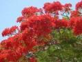 Национальный ботанический сад в Мьянме