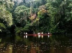 Самый древний лес на планете — Таман Негара