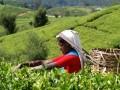 Детский отдых на Шри-Ланке