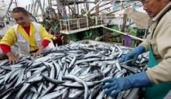 Какую рыбу выловим в Японии?