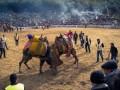 Попасть на верблюжьи бои — очевидное невероятное!
