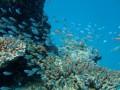 Подводная жизнь — красота коралловых рифов